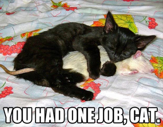 You had one job…